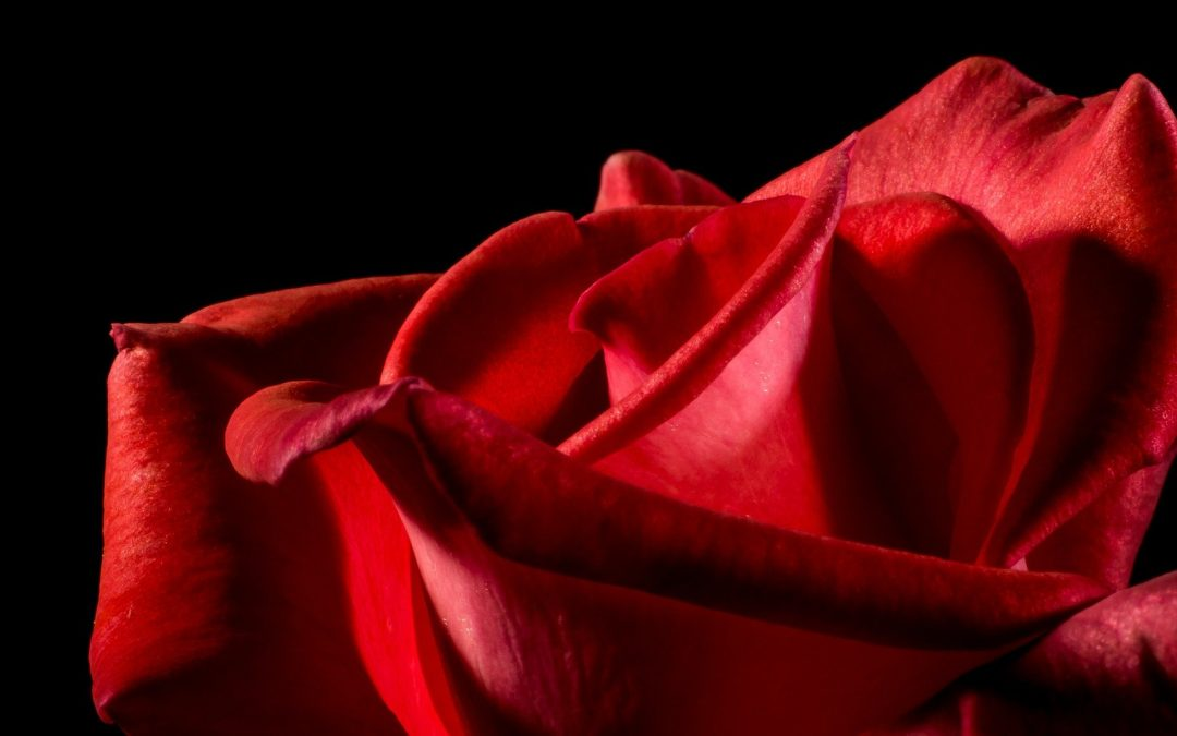 Song of the Rose – With Audio