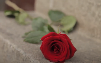 Song of the Rose – Video
